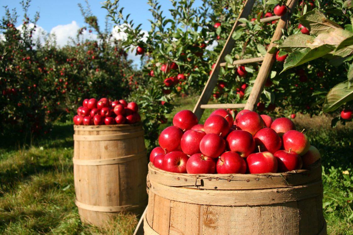 Πλεονεκτήματα και μειονεκτήματα των βιολογικών τροφίμων