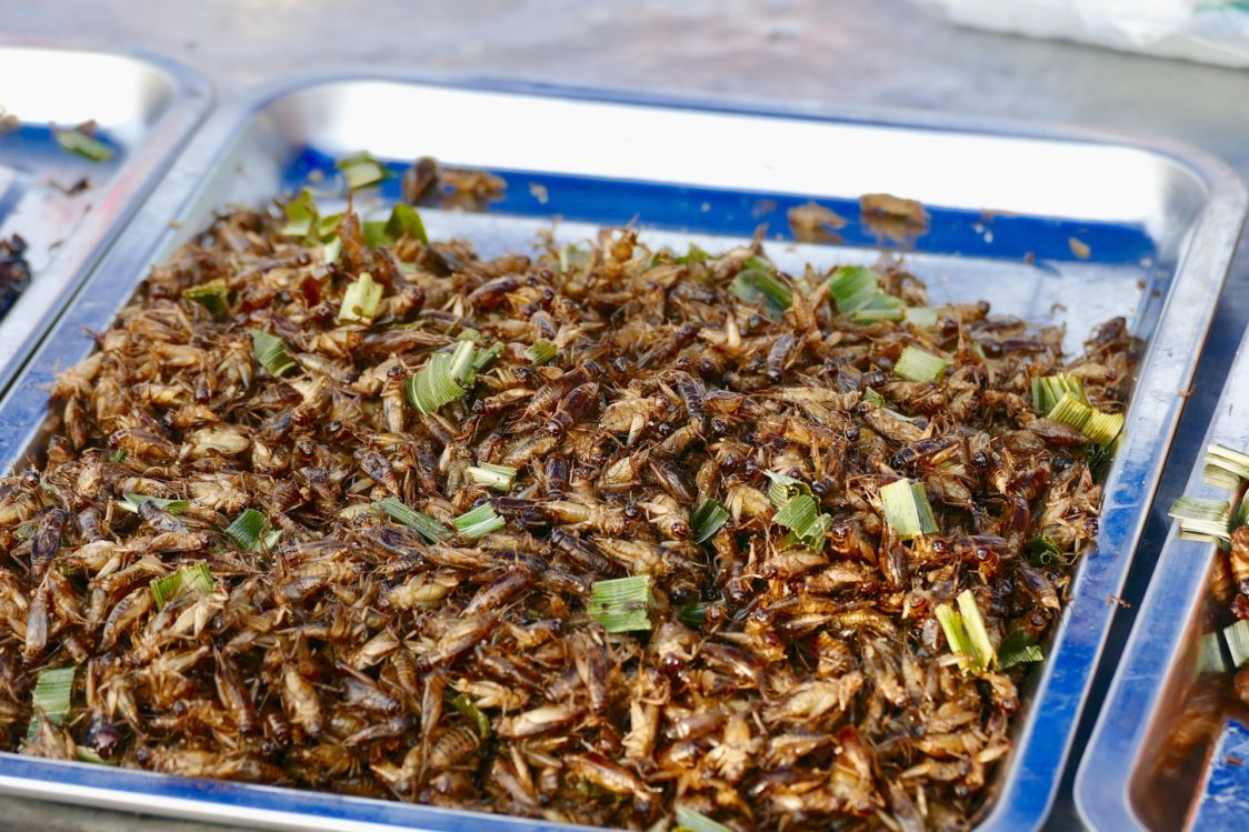 Insects and beetles - food of the future