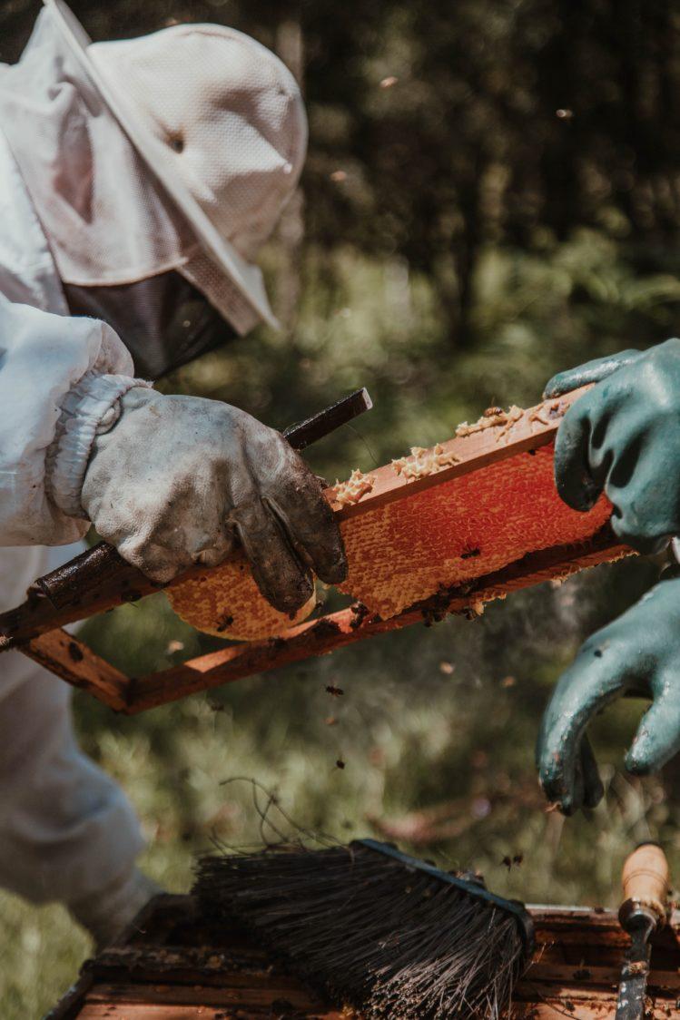 мёд - подсластитель с богатыми традициями