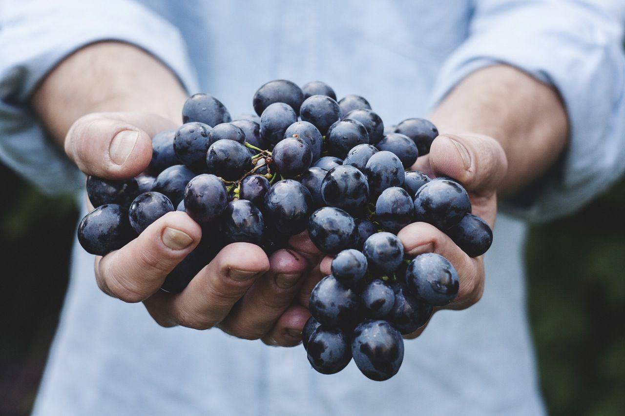 hroznové jadérka: top 10 nejzdravějších semen