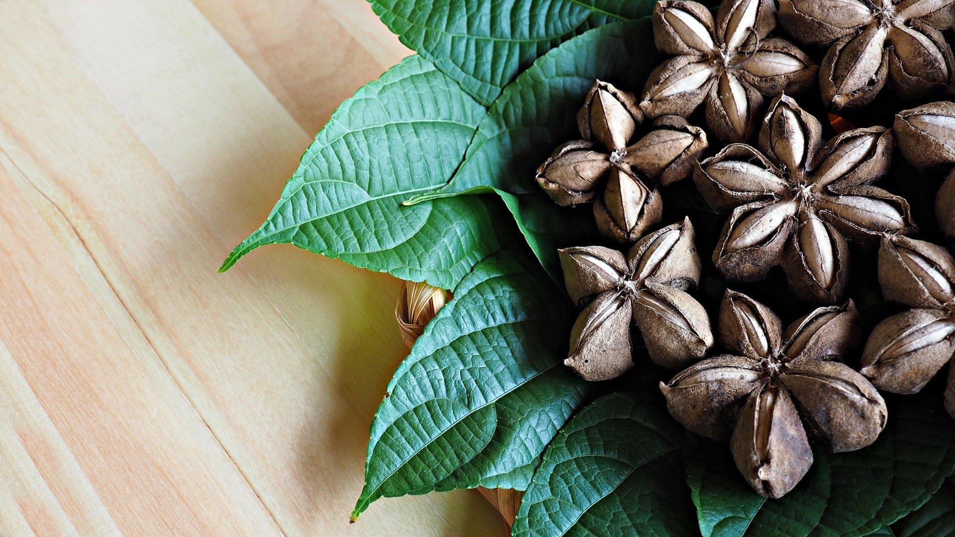 Vorteile von Guanabana-Blatt zur Gewichtsreduktion