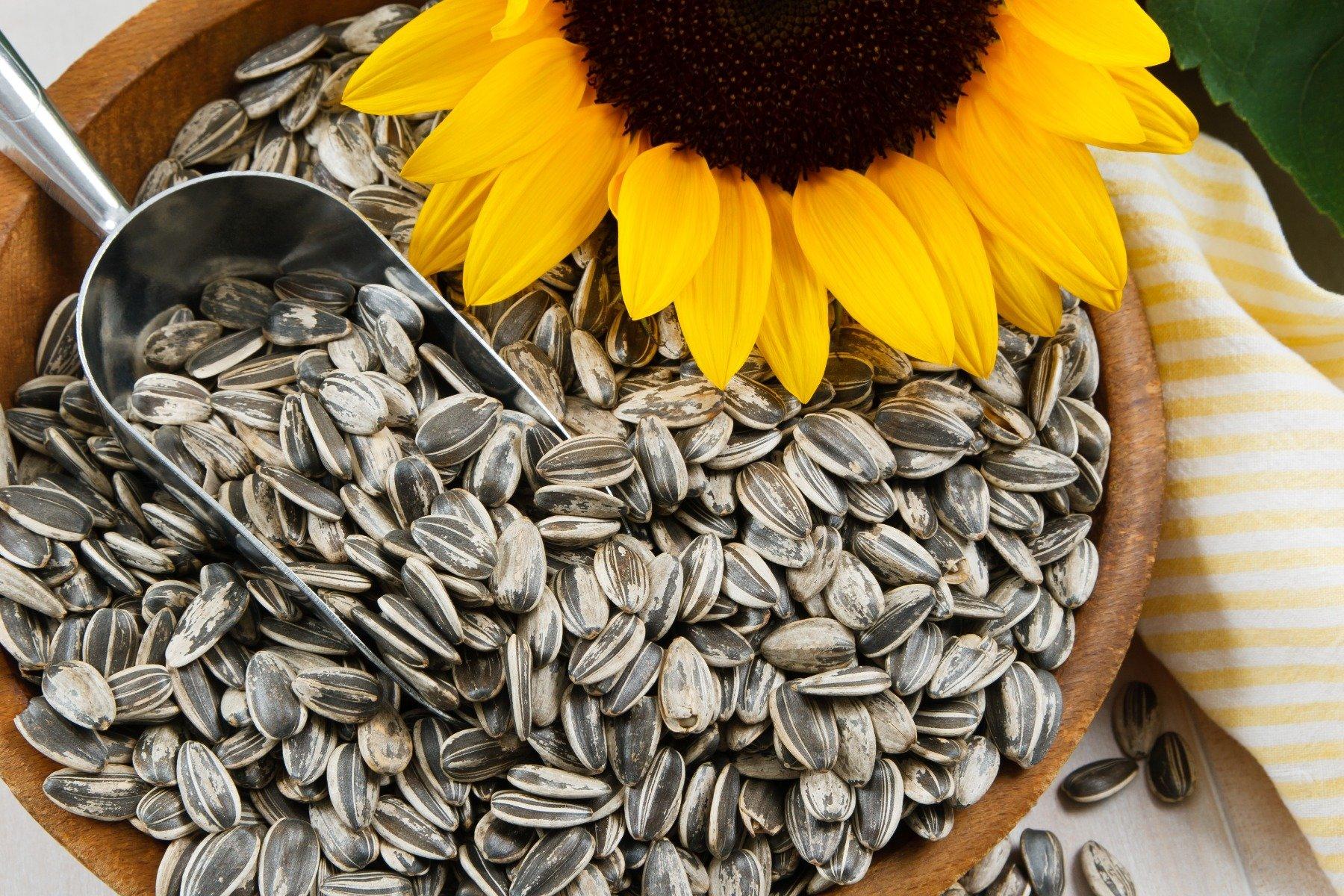 Sunflower Protein, Vegan Protein