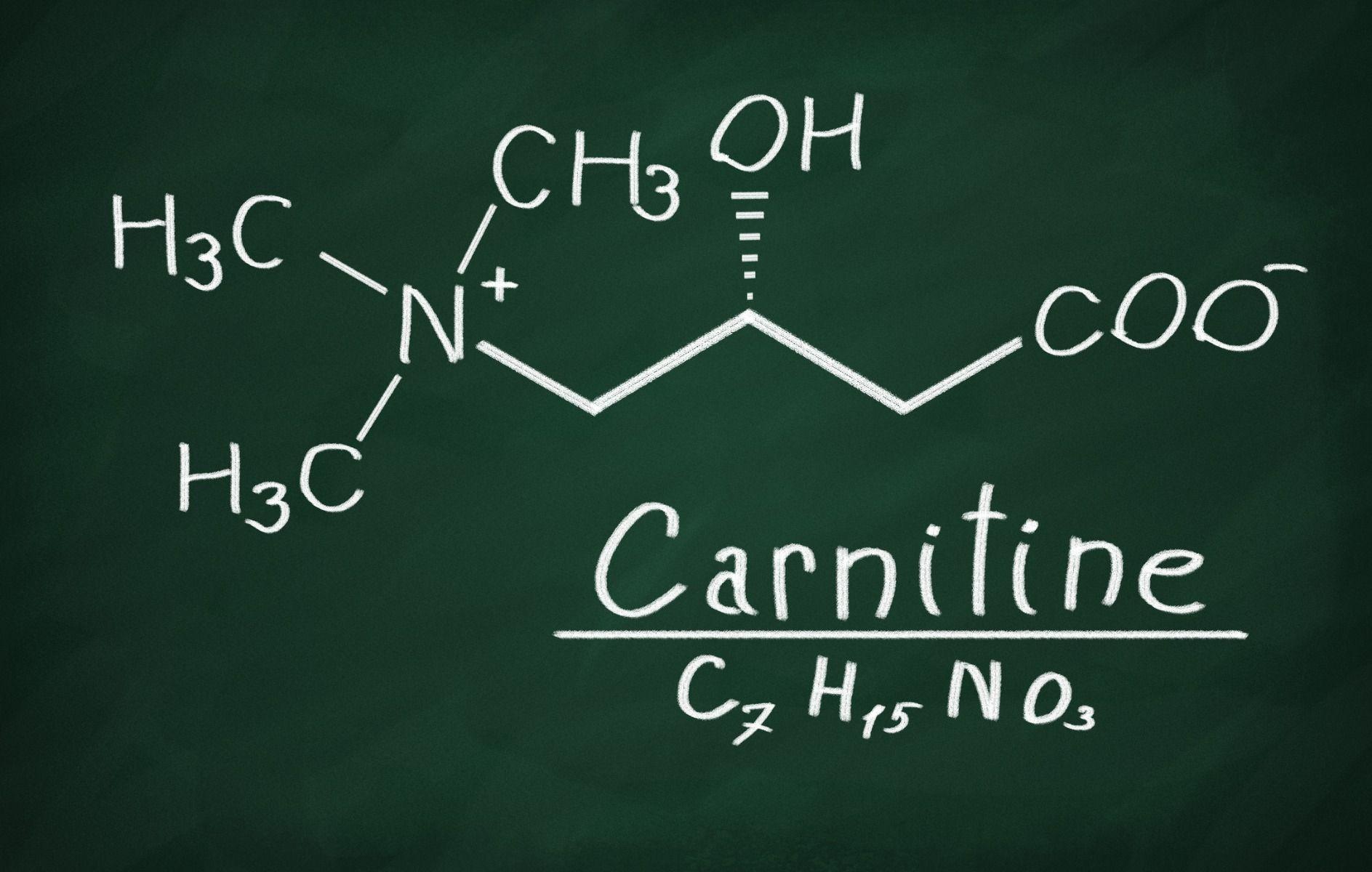 karnitin hatása a szervezetre