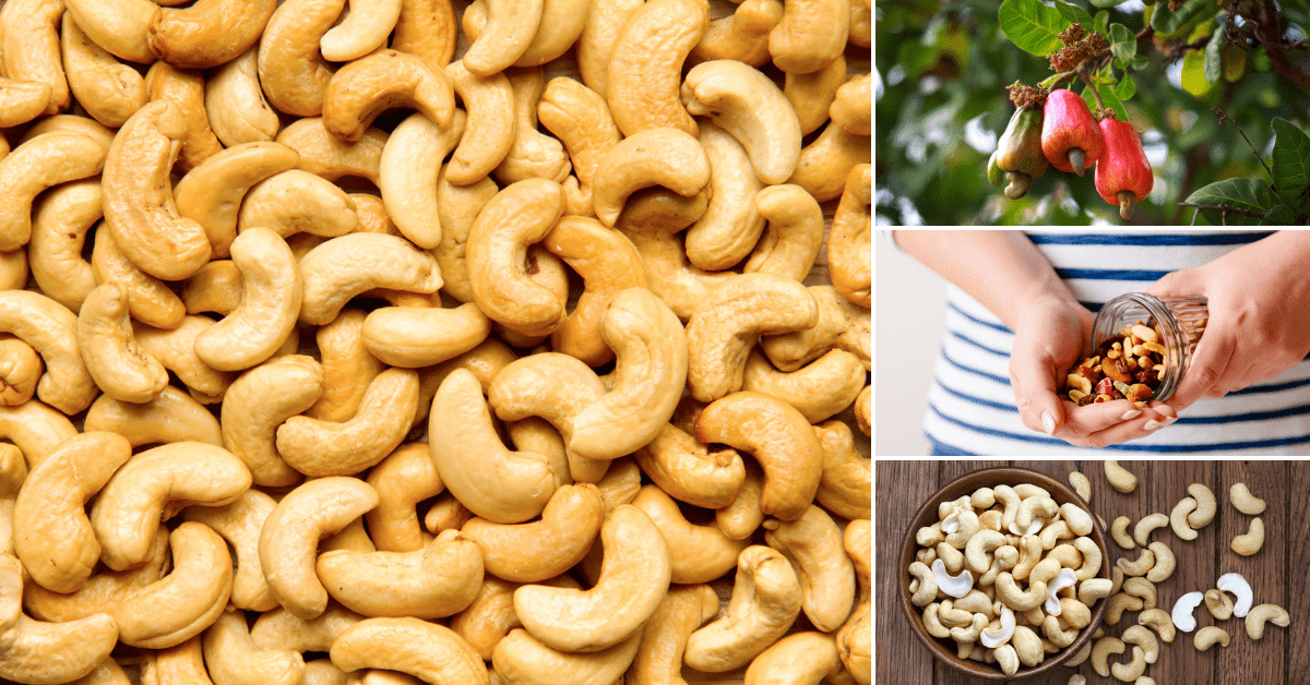 Cashew Nuts Everything You Need To Know Gymbeam Blog